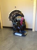 Turkey Patient