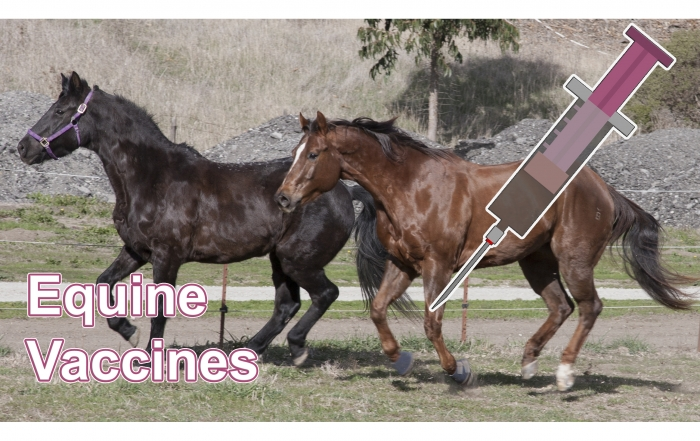 equine vaccines feature photox